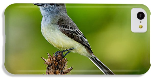 Pale-edged Flycatcher IPhone 5c Case by Anthony Mercieca
