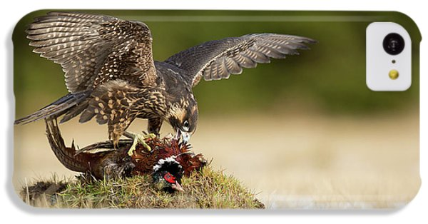 Pheasant iPhone 5c Case - Peregrine Falcon by Milan Zygmunt