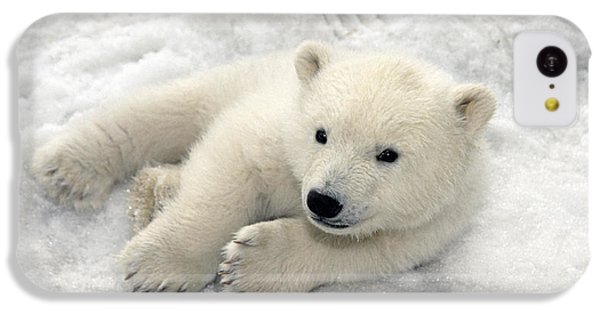 Polar Bear Cub Playing In Snow Alaska IPhone 5c Case by Mark Newman