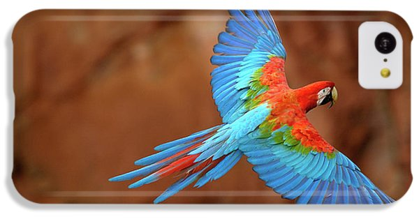 Red And Green Macaw Flying IPhone 5c Case by Pete Oxford