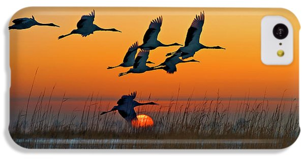 Red-crowned Crane IPhone 5c Case