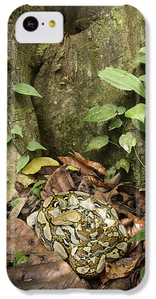 Reticulated Python IPhone 5c Case