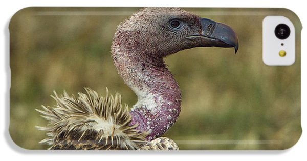 Ruppells Vulture IPhone 5c Case by John Shaw