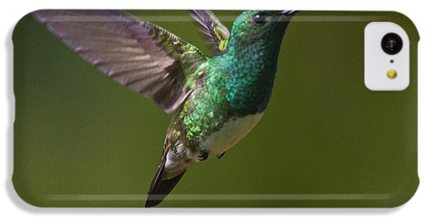 Snowy-bellied Hummingbird IPhone 5c Case