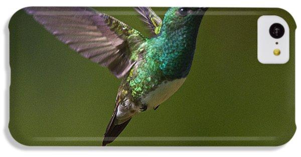 Snowy-bellied Hummingbird IPhone 5c Case by Heiko Koehrer-Wagner