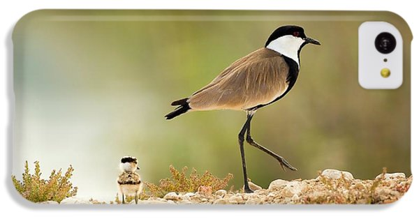 Spur-winged Lapwing Vanellus Spinosus IPhone 5c Case