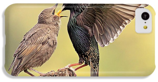 Starlings IPhone 5c Case by Grant Glendinning
