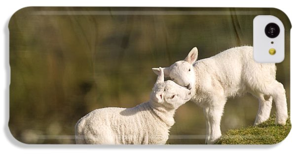 Sheep iPhone 5c Case - Sweet Little Lambs by Angel Ciesniarska