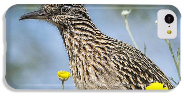 The Greater Roadrunner  IPhone 5c Case
