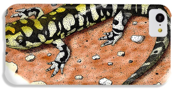 Tiger Salamander IPhone 5c Case by Roger Hall
