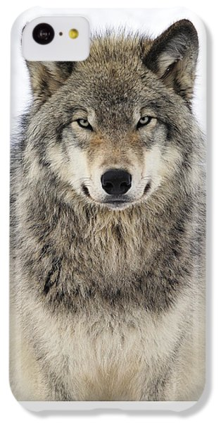 Wolf iPhone 5c Case - Timber Wolf Portrait by Tony Beck