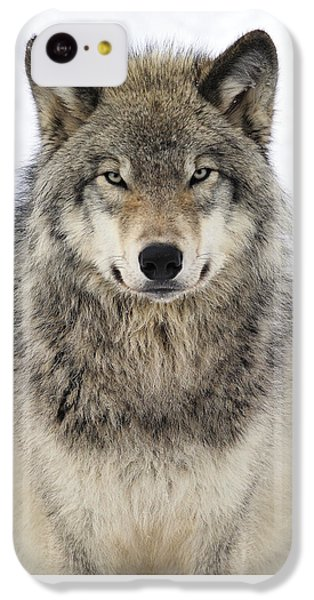 Timber Wolf Portrait IPhone 5c Case