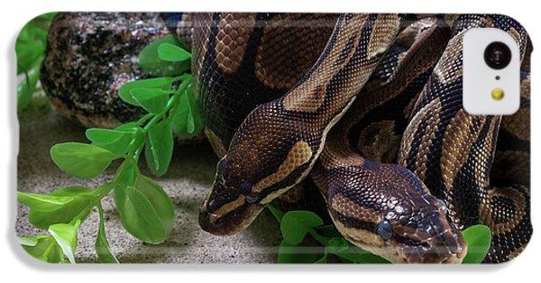 Two Burmese Pythons Python Bivittatus IPhone 5c Case