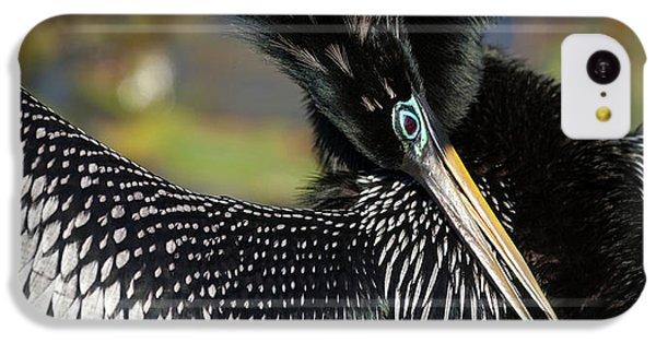 Anhinga iPhone 5c Case - Usa, Florida, Everglades National Park by Jaynes Gallery