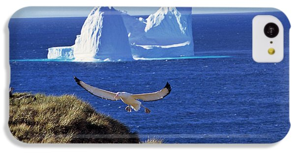 Wandering Albatross (diomendea Exulans IPhone 5c Case