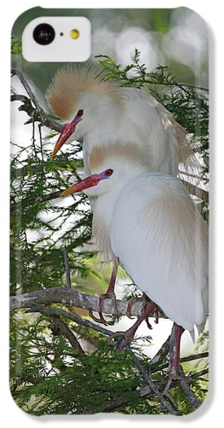 Usa, Florida, St IPhone 5c Case by Jaynes Gallery