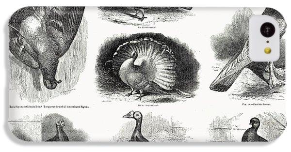 1868 Darwin Pigeon Breeds Illustration IPhone 5c Case by Paul D Stewart