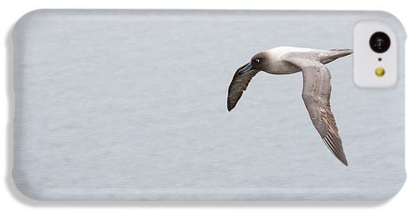 A Light Mantled Albatross IPhone 5c Case