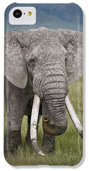 African Elephant Loxodonta Africana IPhone 5c Case by Panoramic Images