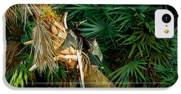 Anhinga iPhone 5c Case - Anhinga Anhinga Anhinga On A Tree by Panoramic Images