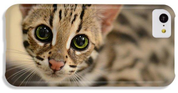 Cat iPhone 5c Case - Asian Leopard Cub by Laura Fasulo