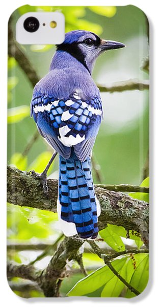 Bluejay IPhone 5c Case