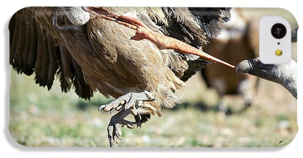 Griffon Vultures Feeding IPhone 5c Case