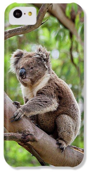 Koala (phascolarctos Cinereus IPhone 5c Case