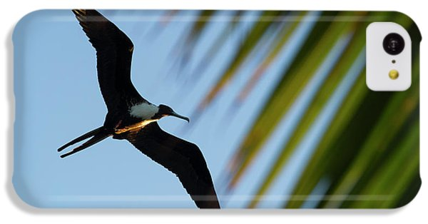 Belize iPhone 5c Case - Magnificent Frigatebird (fregata by Pete Oxford