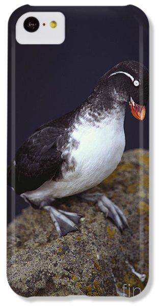 Parakeet Auklet IPhone 5c Case