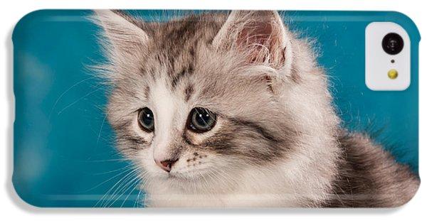 Cat iPhone 5c Case - Sibirian Cat Kitten by Doreen Zorn