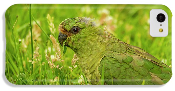 Parakeet iPhone 5c Case - South America, Chile, Patagonia, Torres by Jaynes Gallery