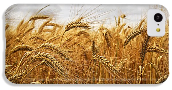 Rural Scenes iPhone 5c Case - Wheat by Elena Elisseeva