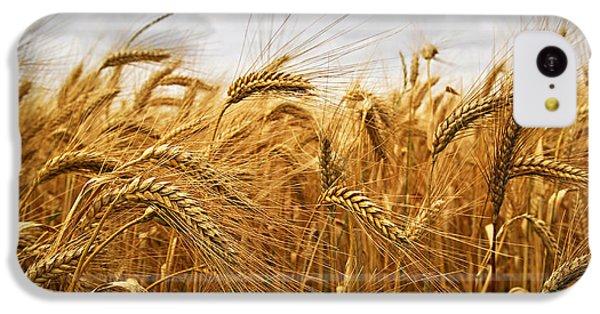 Wheat IPhone 5c Case by Elena Elisseeva