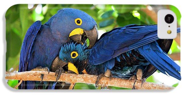 Brazil, Mato Grosso, The Pantanal IPhone 5c Case