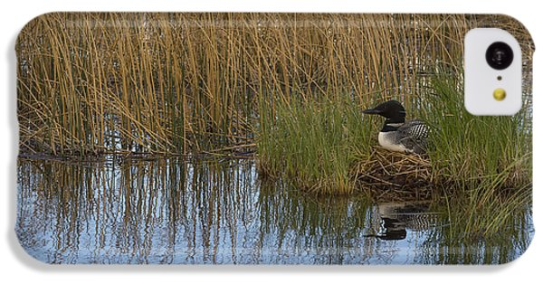 Common Loon Gavia Immer, Canada IPhone 5c Case