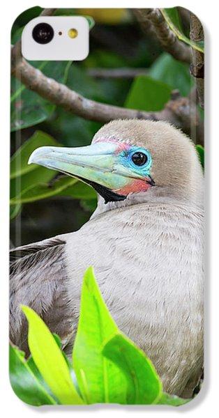 Ecuador, Galapagos Islands, Genovesa IPhone 5c Case