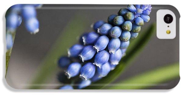 Grape Hyacinth IPhone 5c Case