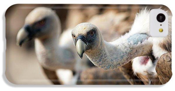 Griffon Vultures IPhone 5c Case by Nicolas Reusens