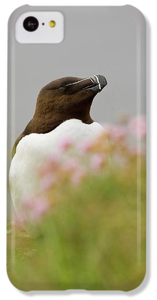 Iceland, Latrabjarg IPhone 5c Case