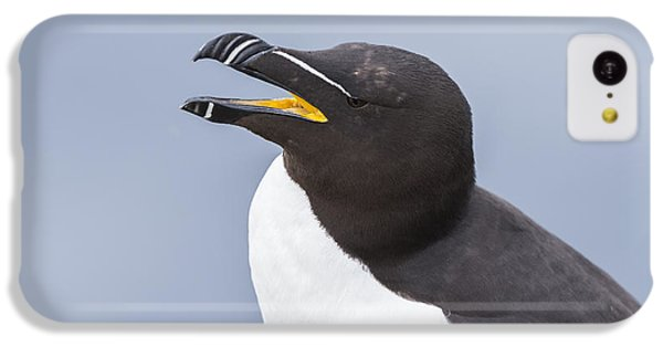 Razorbill IPhone 5c Case