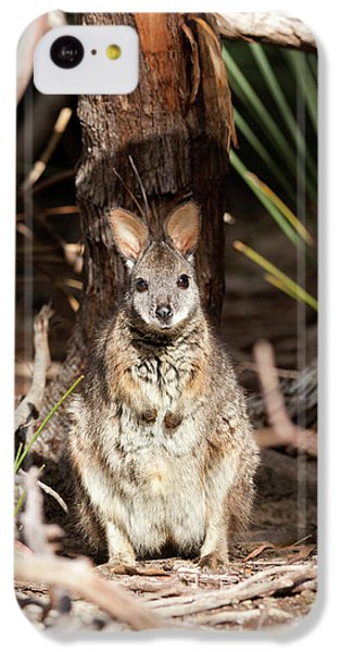 Tammar Wallaby (macropus Eugenii IPhone 5c Case by Martin Zwick