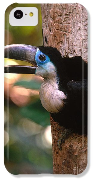 Yellow-ridged Toucan IPhone 5c Case by Art Wolfe