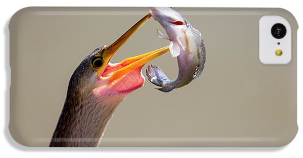 Anhinga iPhone 5c Case - Brazil, Mato Grosso, The Pantanal by Ellen Goff
