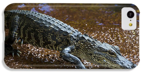 American Alligator IPhone 5c Case by Mark Newman