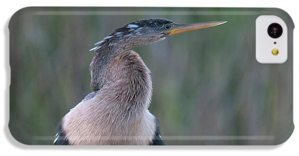 Anhinga IPhone 5c Case by Mark Newman