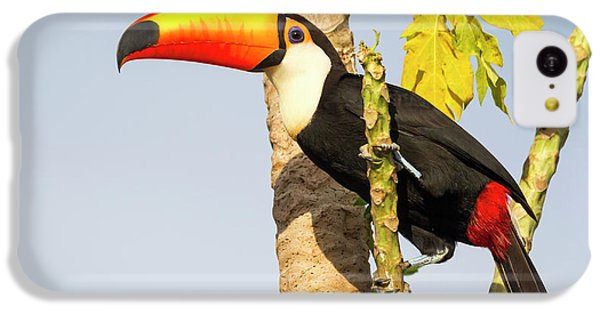 Brazil, Mato Grosso, The Pantanal, Toco IPhone 5c Case