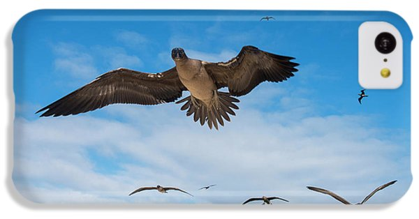 Red-footed Booby (sula Sula Websteri IPhone 5c Case
