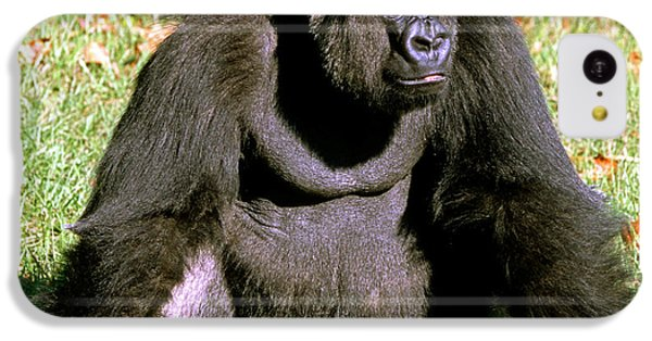 Adult Male Western Lowland Gorilla IPhone 5c Case