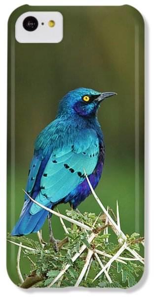 Starlings iPhone 5c Case - Kenya, Lake Nakuru National Park by Jaynes Gallery